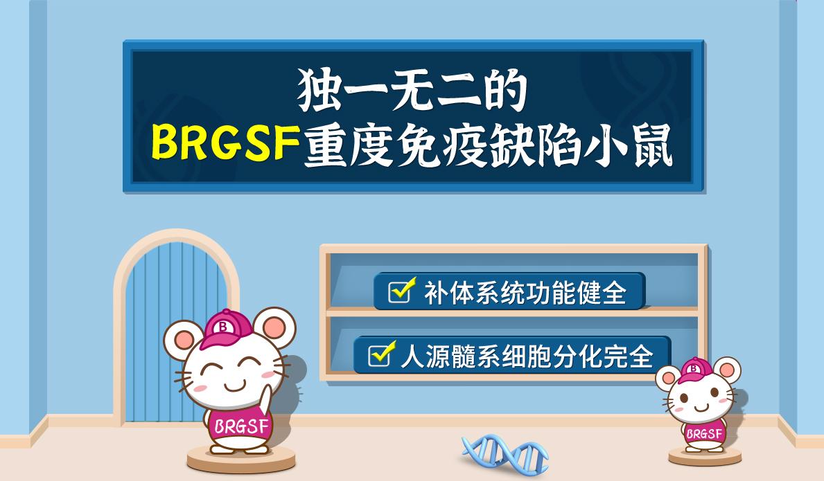 独一无二的BRGSF重度免疫缺陷小鼠