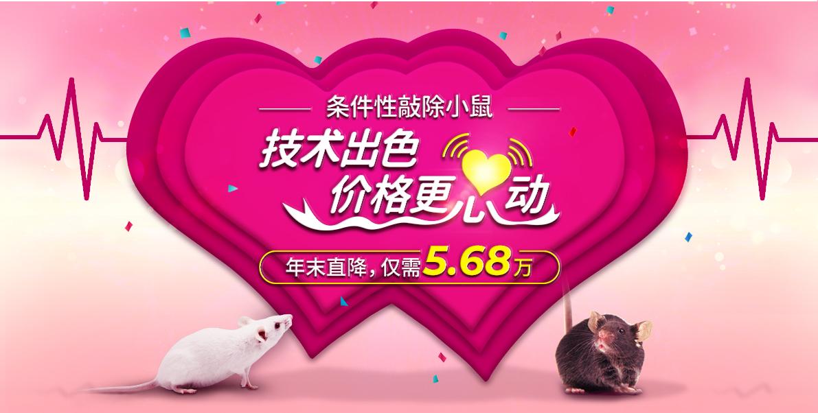 条件性敲除小鼠 技术出色 价格更心动 年末直降,仅需5.68万
