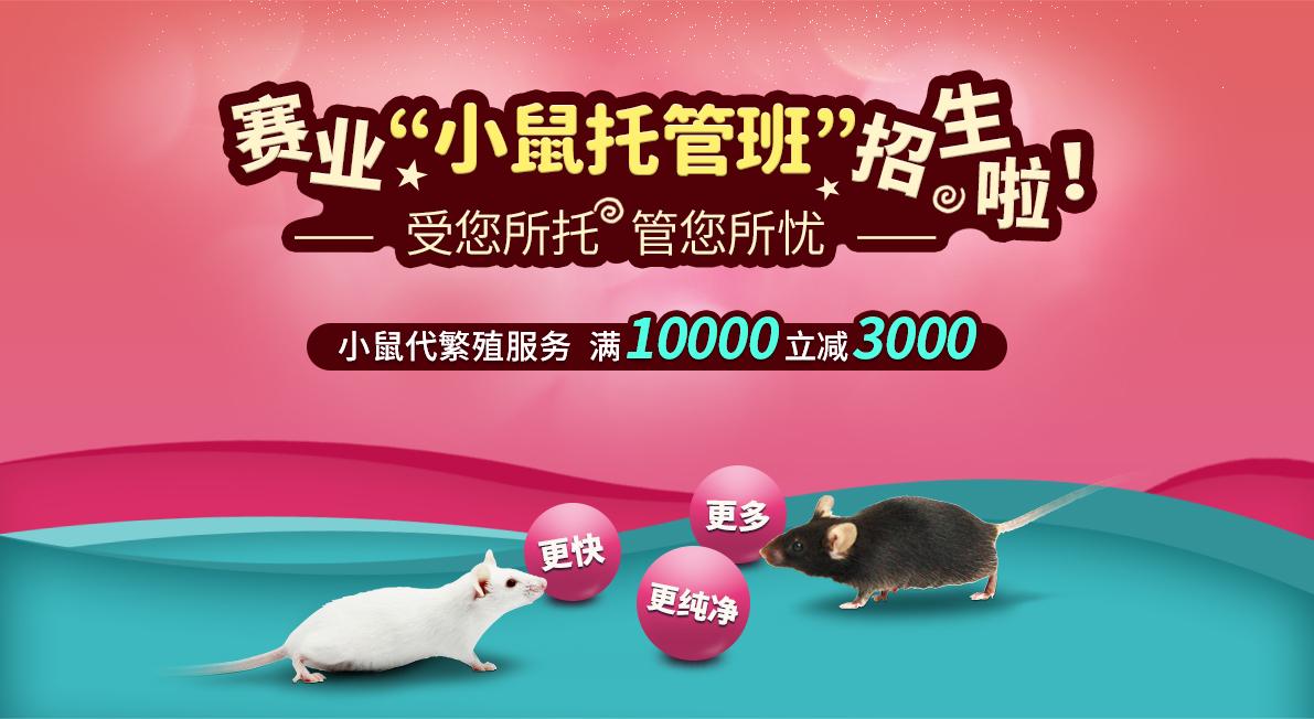 """赛业""""小鼠托管班"""" 招生啦! 受您所托 管您所忧 小鼠代繁殖服务 满10000立减3000 更快 更多 更纯净"""
