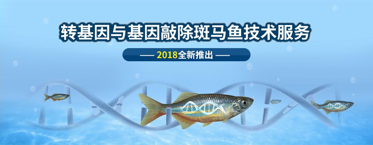 转基因与基因敲除斑马鱼技术服务,2018全新推出