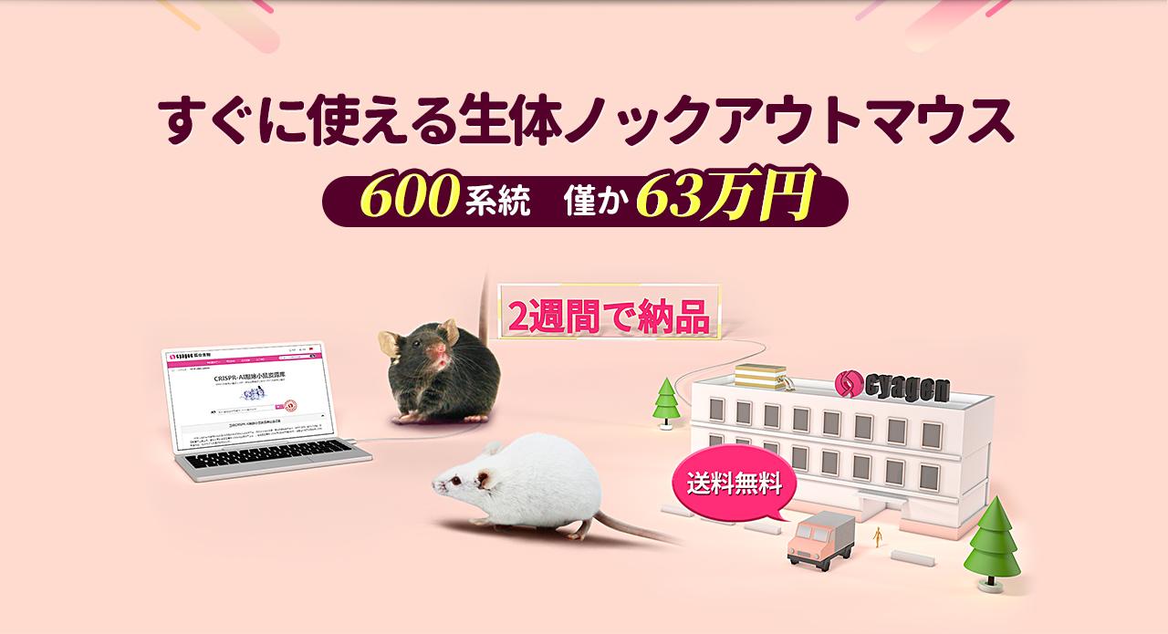别让实验在等待中度过 1000品系活体敲除小鼠 仅需1.28万/对 快至两周